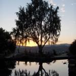 landscape tree and pond