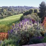 landscape purple plants